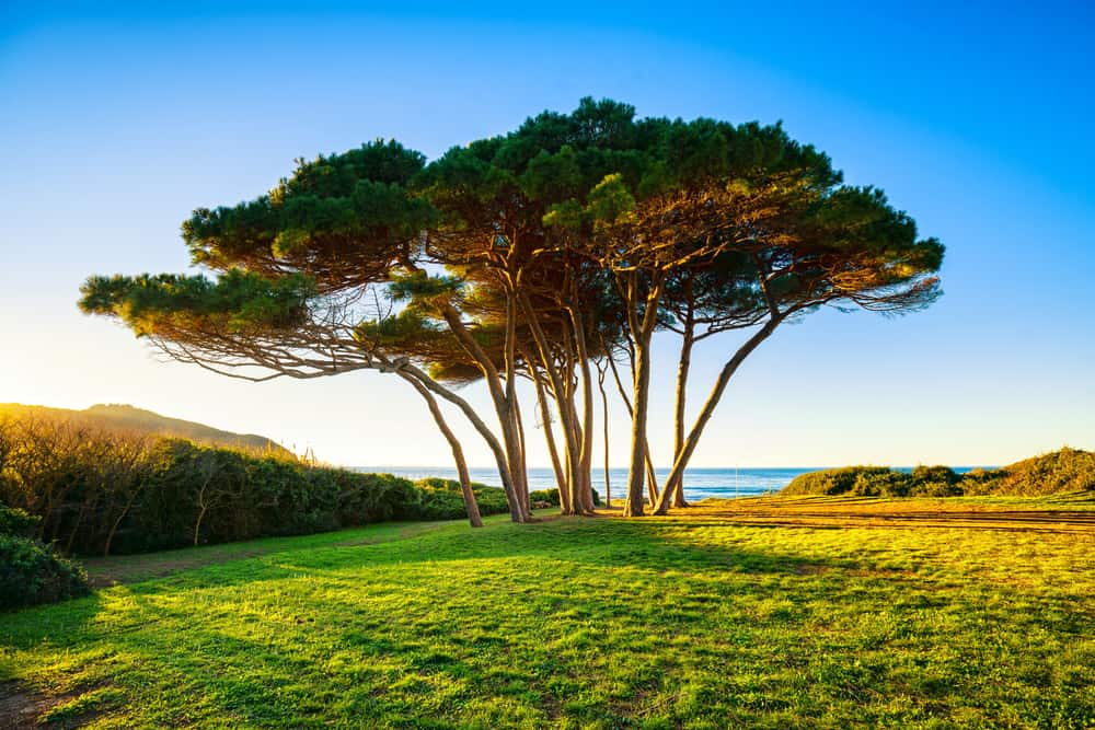 Maritime Pine Bark Extract: An Anti-Aging Solution?