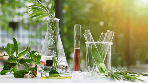 Botanical medicine and infections