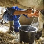 Colostrum, leaky gut, and immunity
